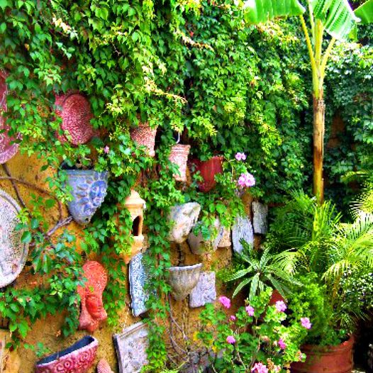 Mexican courtyard garden with vines growing on a wall.