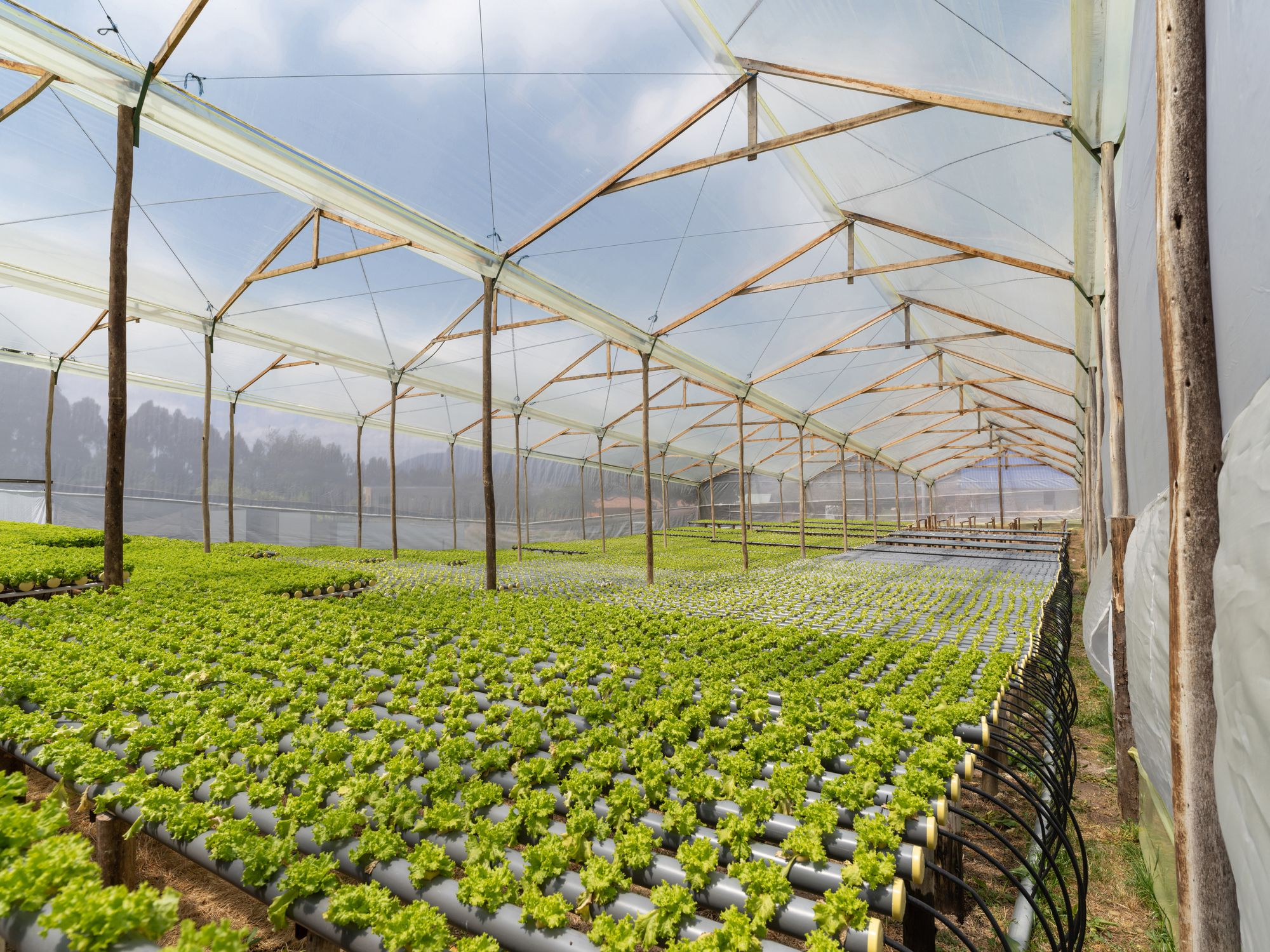 The 6 Best DIY Hydroponic Systems