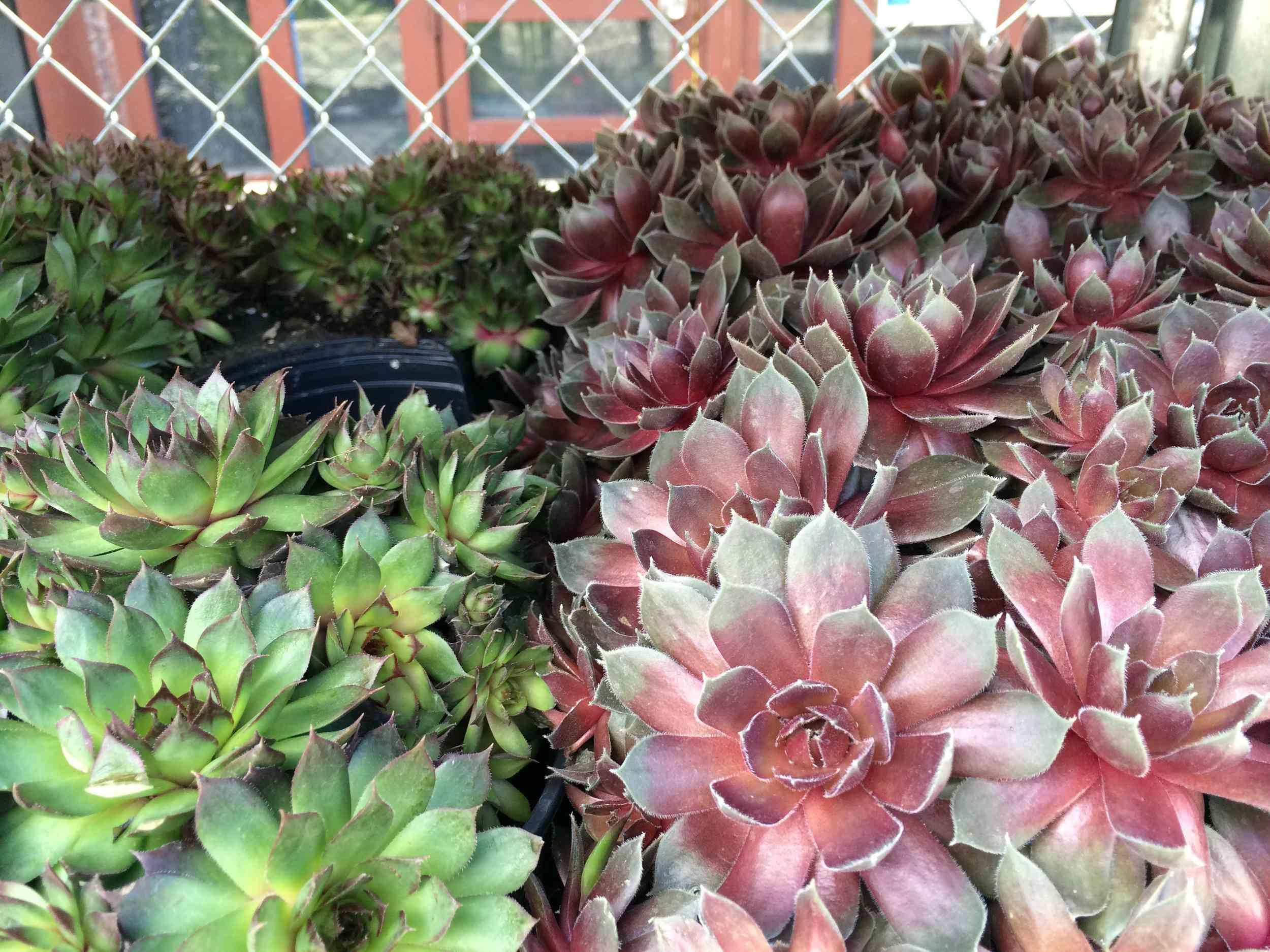 Plantas de Natty Garden