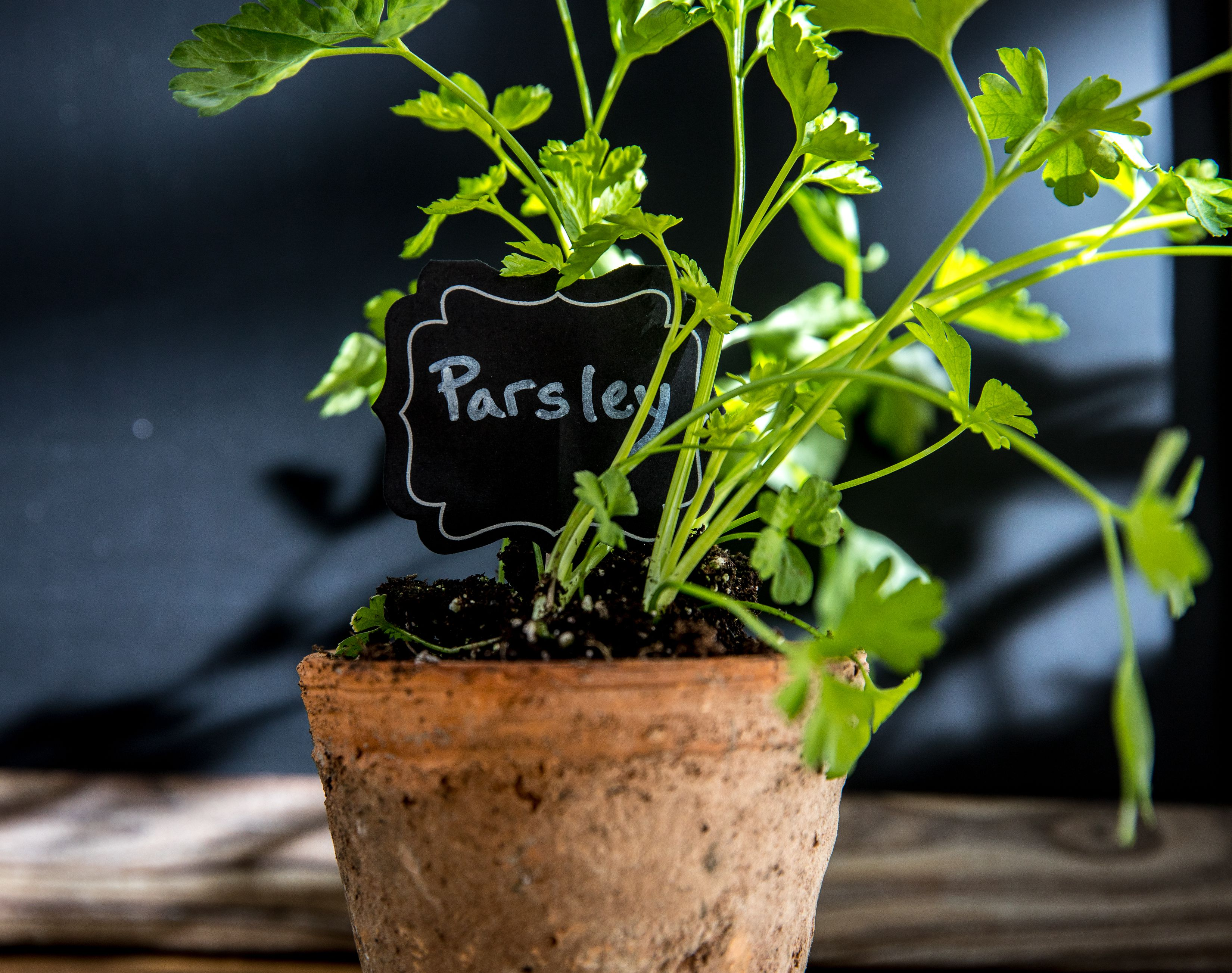 Parsley in a pot with a sign