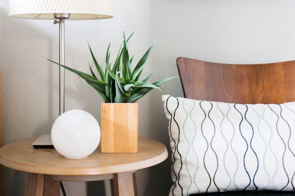 aloe plant on a bedside table