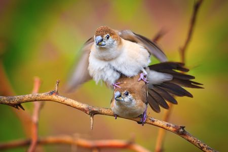 How Do Birds Mate Courtship And Sex In Birds