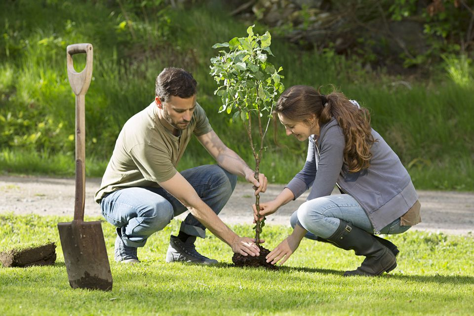 Couple planting tree