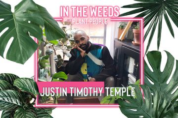 In the Weeds With Plant People, Justin Timothy Temple episode 4