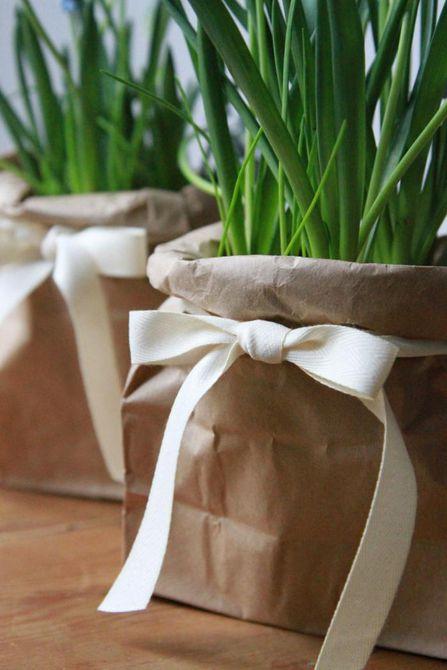Una planta en maceta en una bolsa marrón con cinta