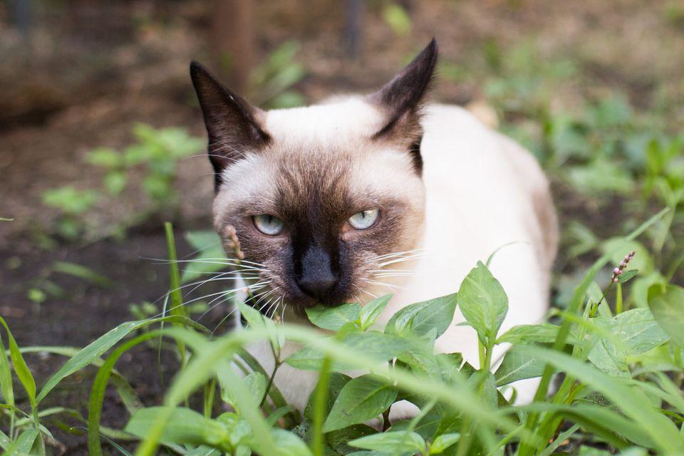 cat stalking
