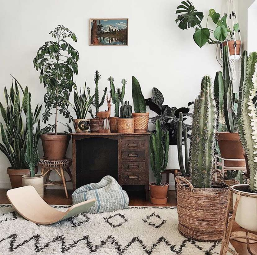 A variety of potted cacti in a room
