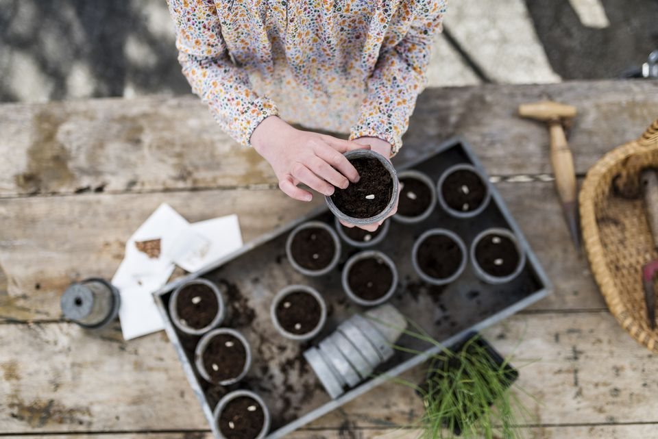 Young Girl Planting Seeds Into Pots Overhead View