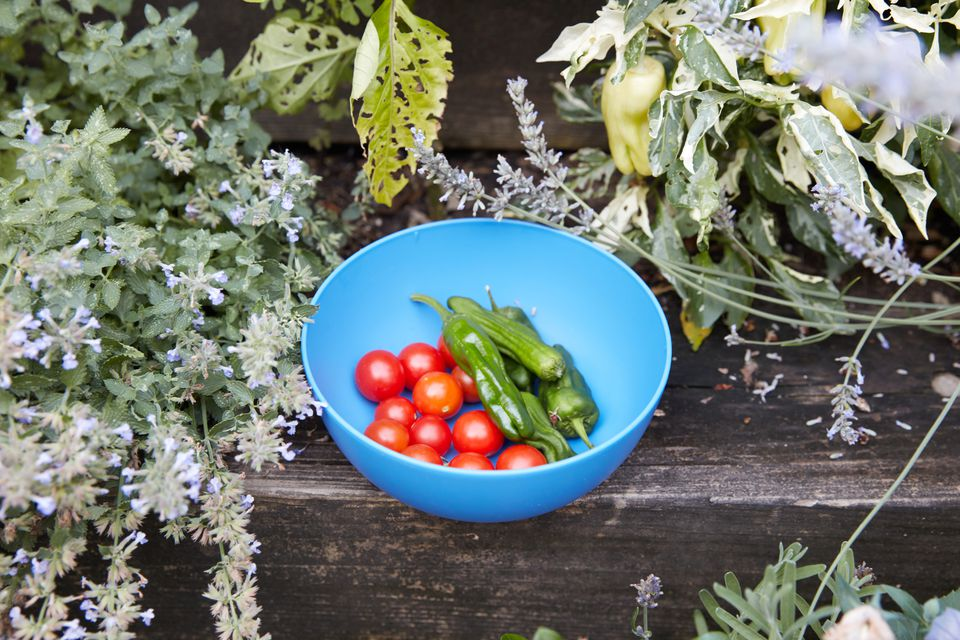 summer vegetable harvest