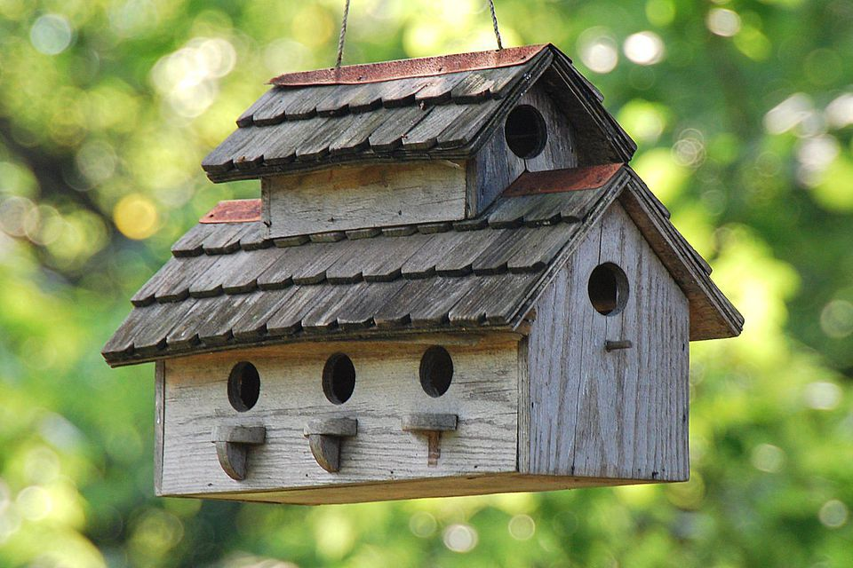 Diy Birdhouse Kit Nz