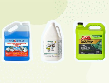 Best Mold Removers