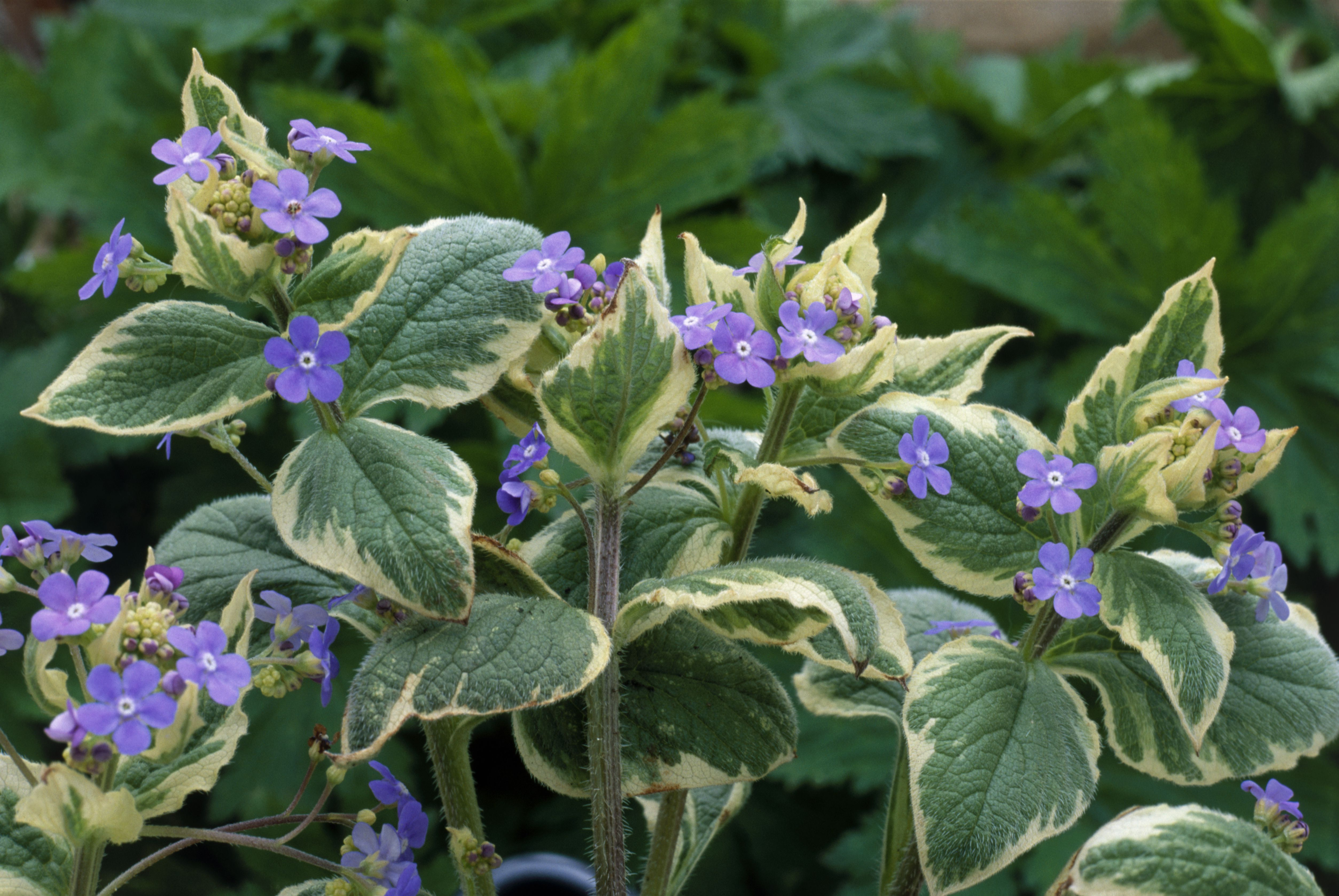 Perennial plants that dont need deadheading mightylinksfo