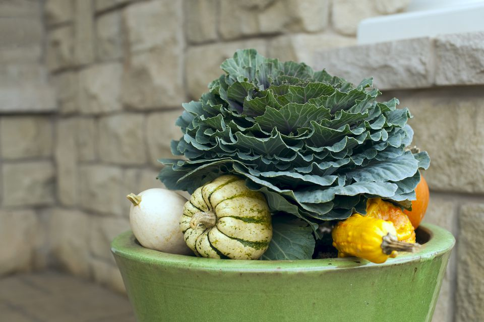 Decorative Fall kale planter