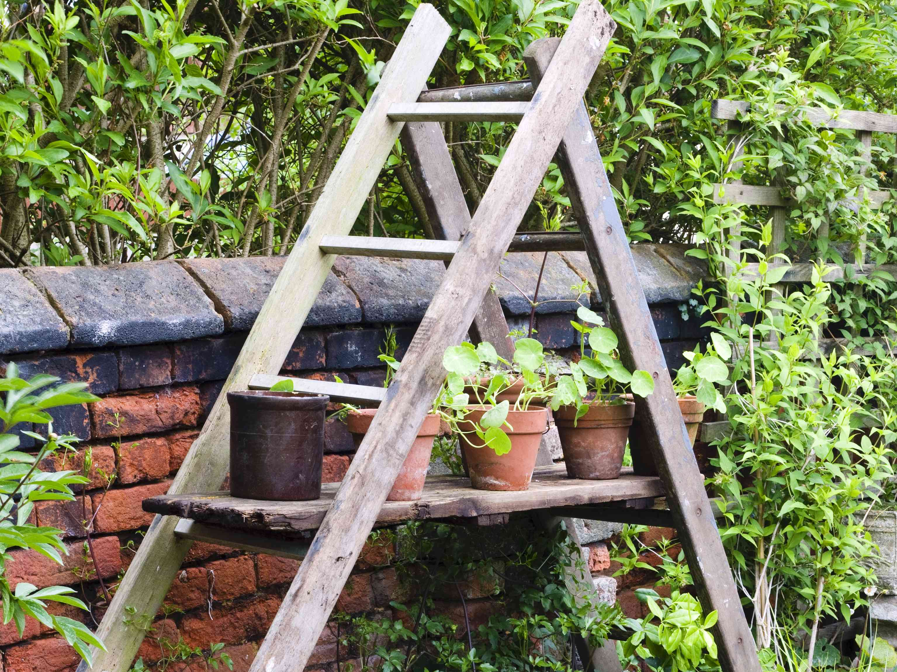 potted plants on a ladder