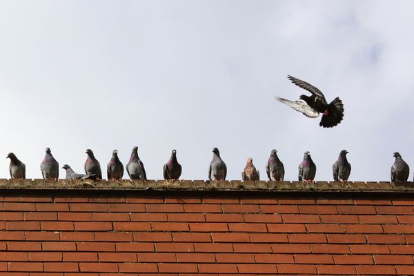 Roofline with pigeons perched