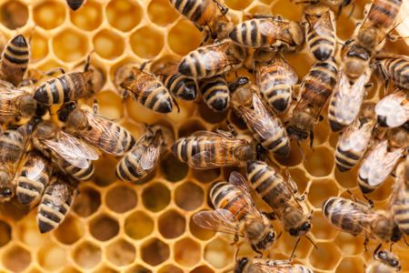 Can I Raise Bees In My Backyard how to keep bees: a beginner's guide to beekeeping