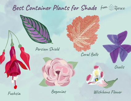 5 Fabulous Plants For Spring Container Gardens