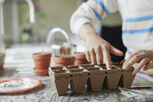 Woman starting seeds indoors