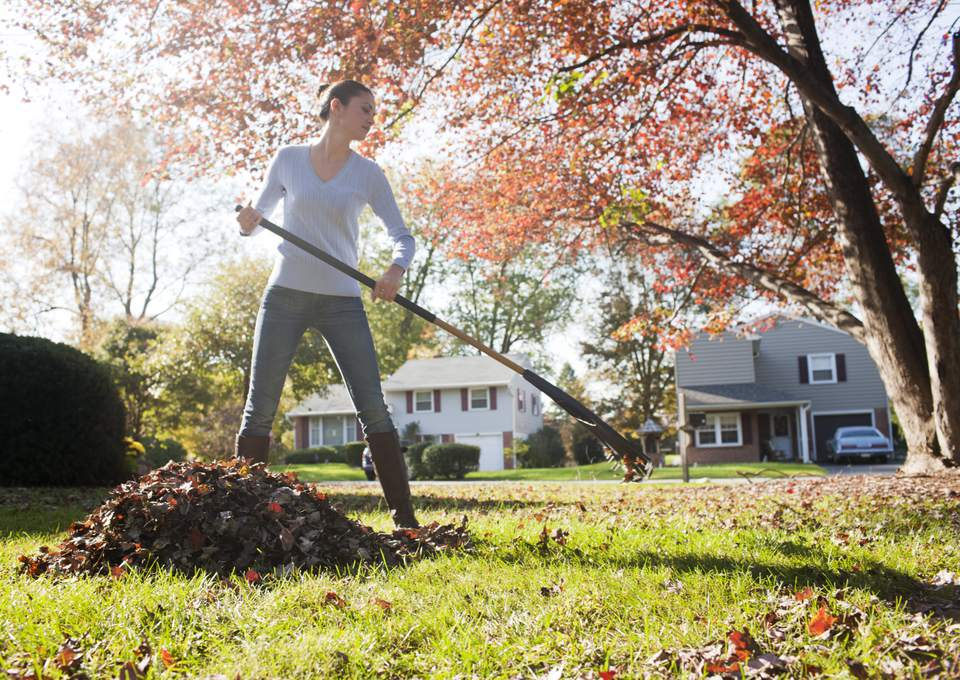 Woman raking leaves on her front lawn