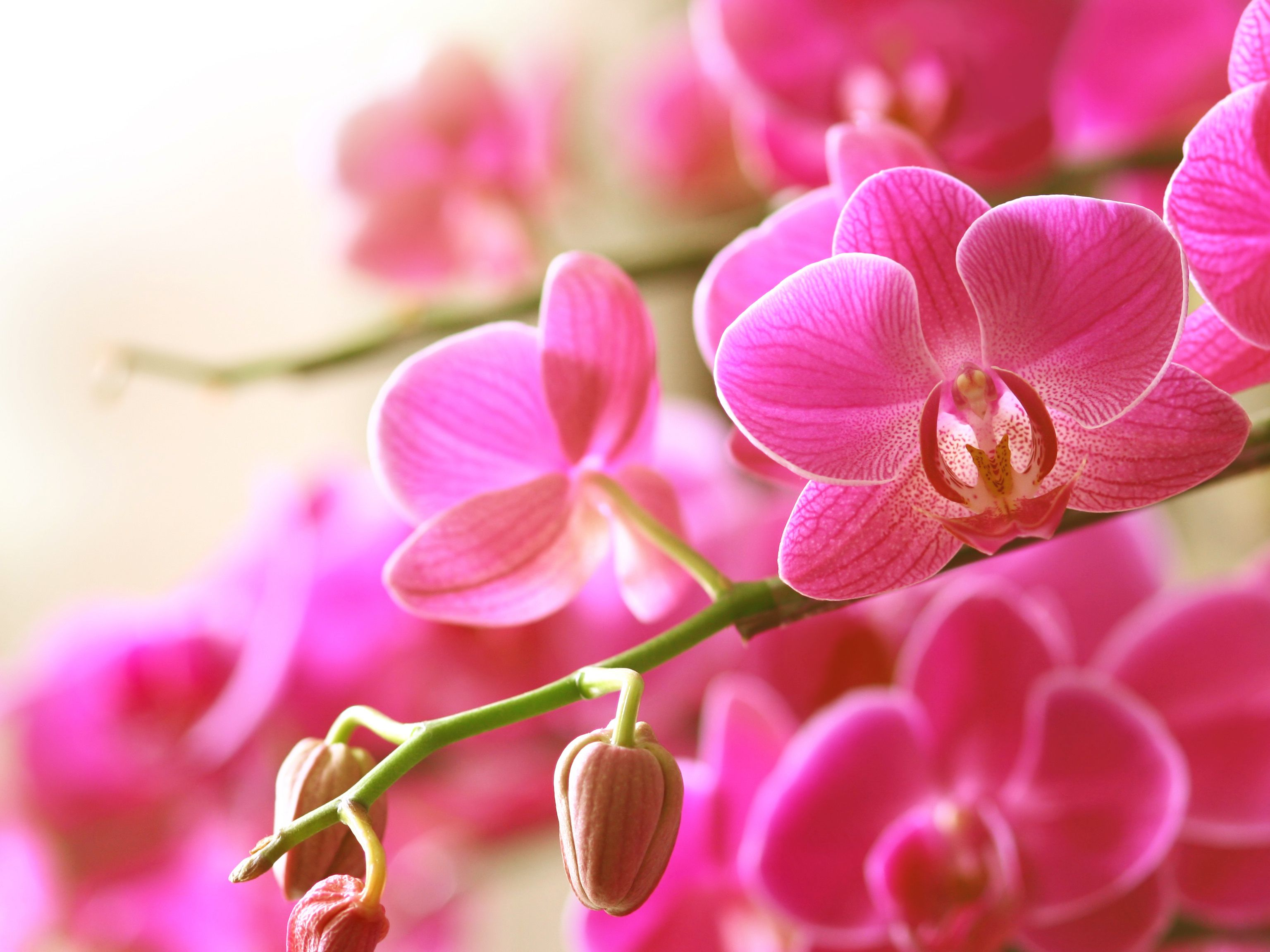 How To Shop For Orchids
