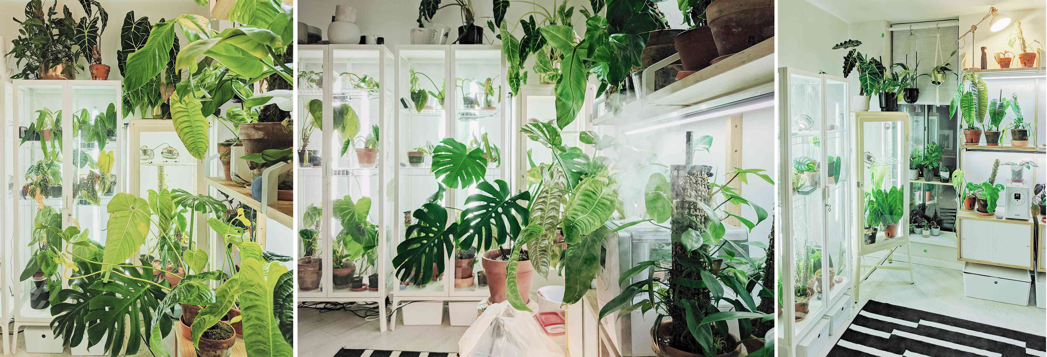 Vinny of @Vinny.aroids created three different greenhouses from IKEA cabinets for his huge aroid plant collection