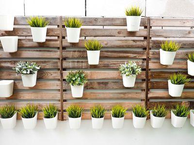 plants hanging on walls