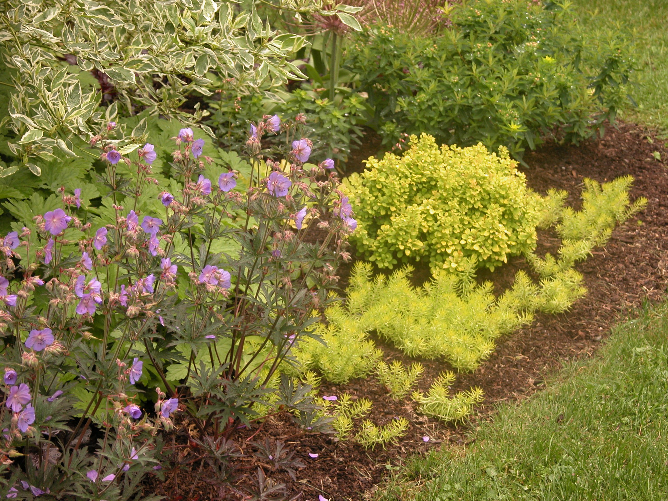 Darker mulched used to bring out color in plants