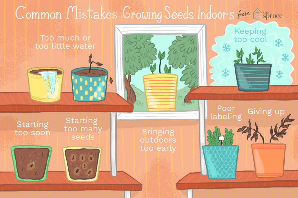 illustration of common mistakes growing seeds indoors