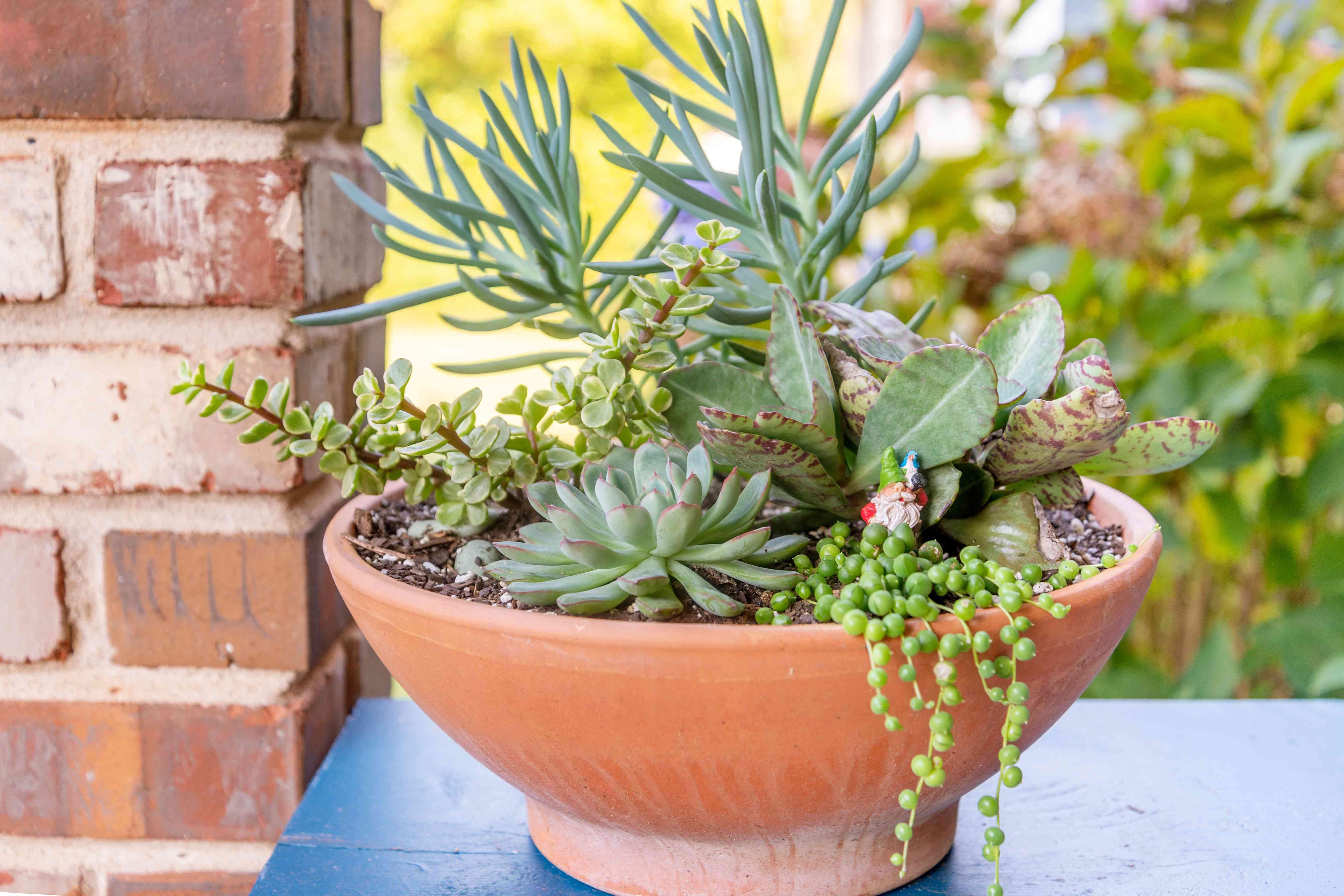 Debbie Wolfe's succulent pot