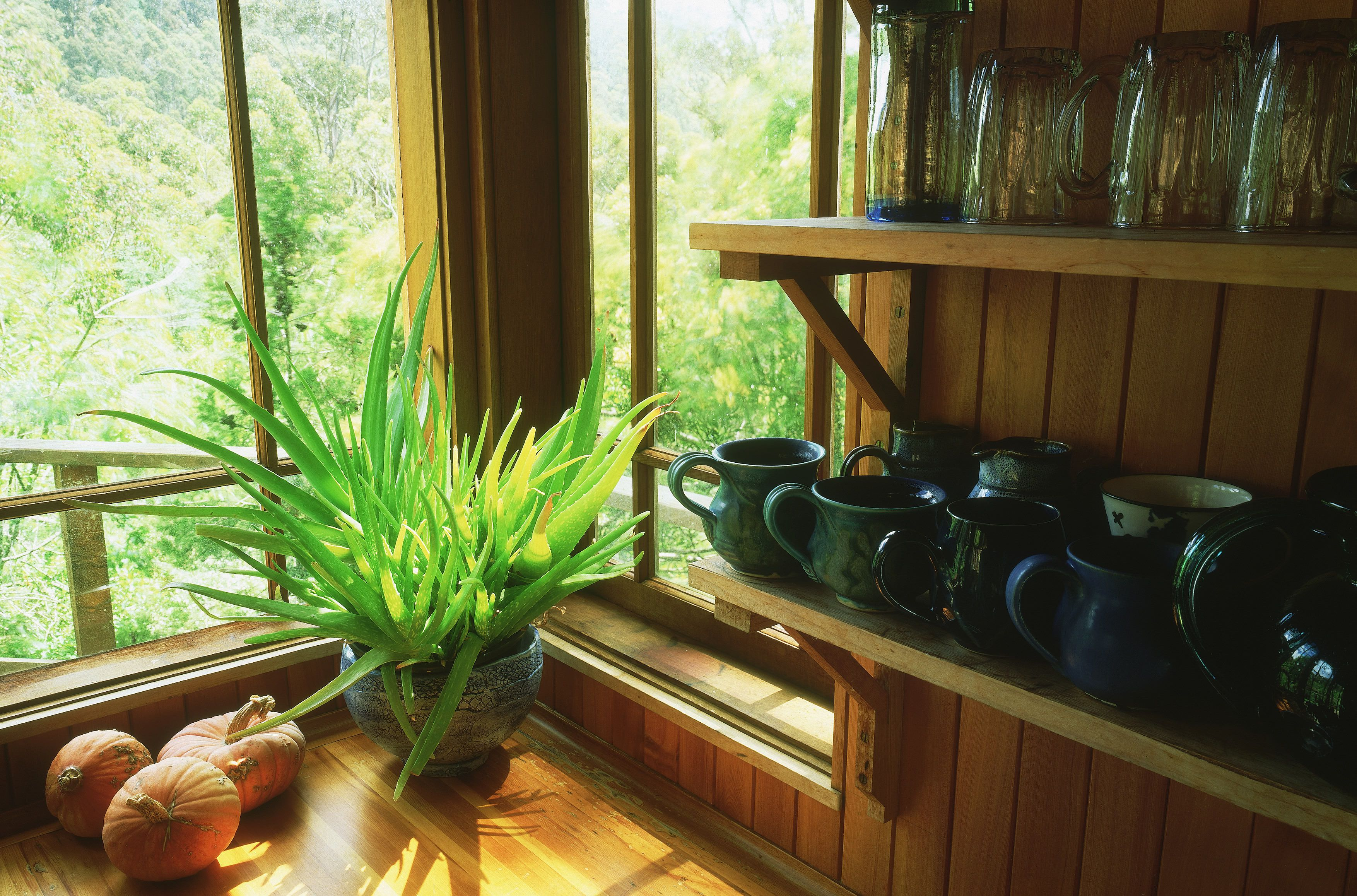 Best Houseplants For Sunny Windows