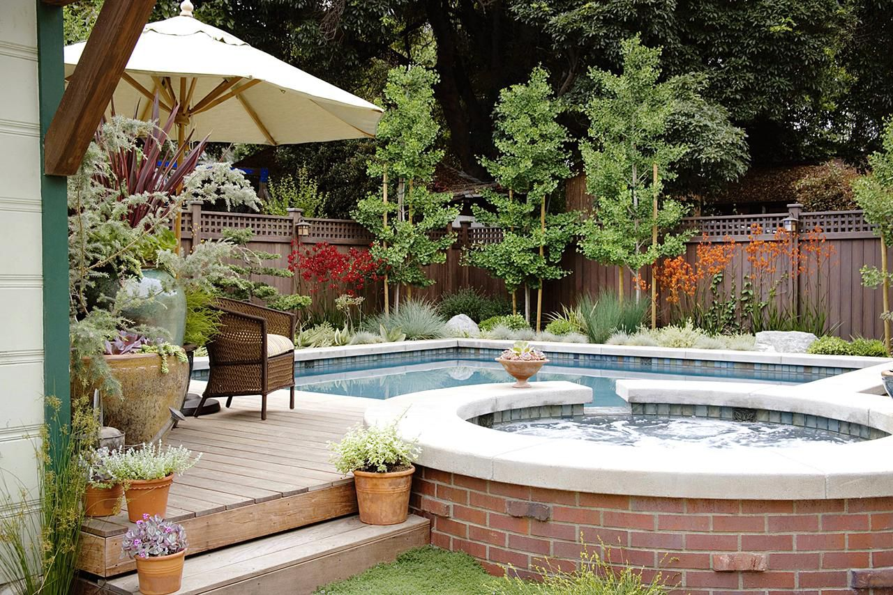 The best plants for poolside gardens for Best plants around swimming pool