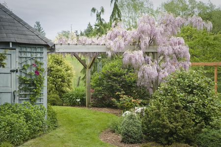 Add Shade and Beauty to a Pergola or Arbor - The Best Vines For Pergolas And Arbors