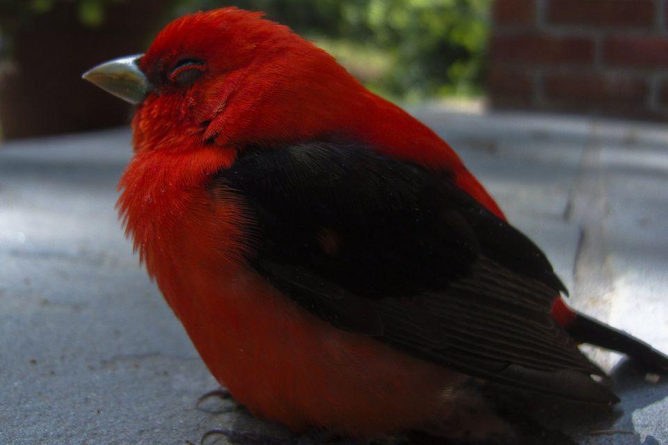 Stunned Bird