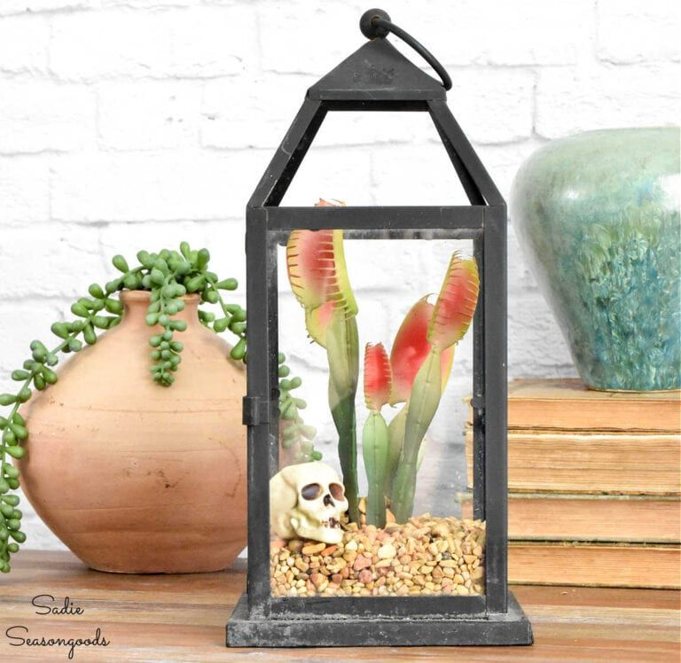 A candle lantern with a plant and skull in it