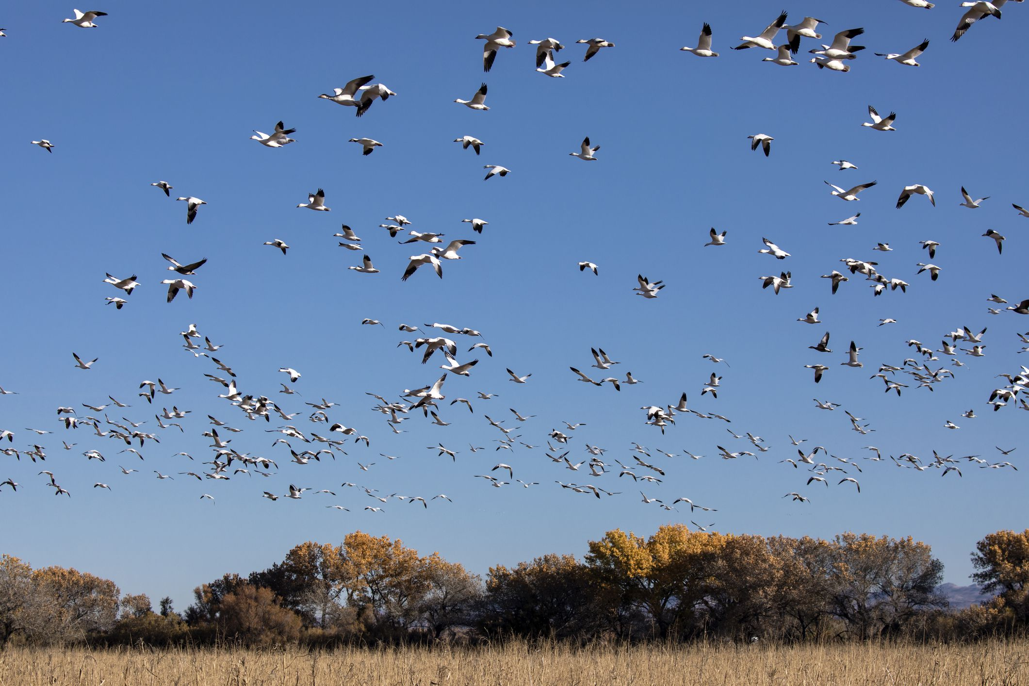 When Is Fall Bird Migration