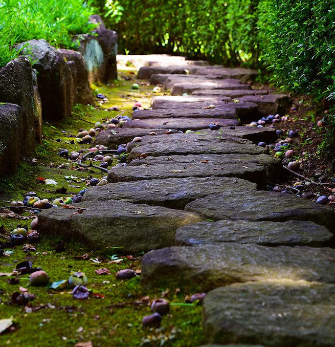 Close up of stone path through garden with hedge and fallen plums