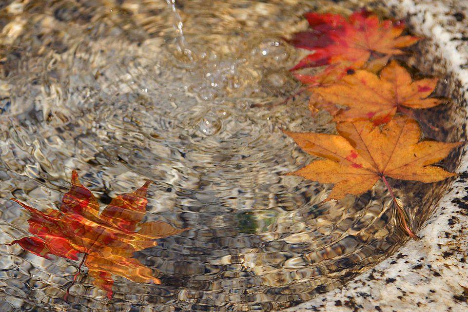Fall Bird Bath