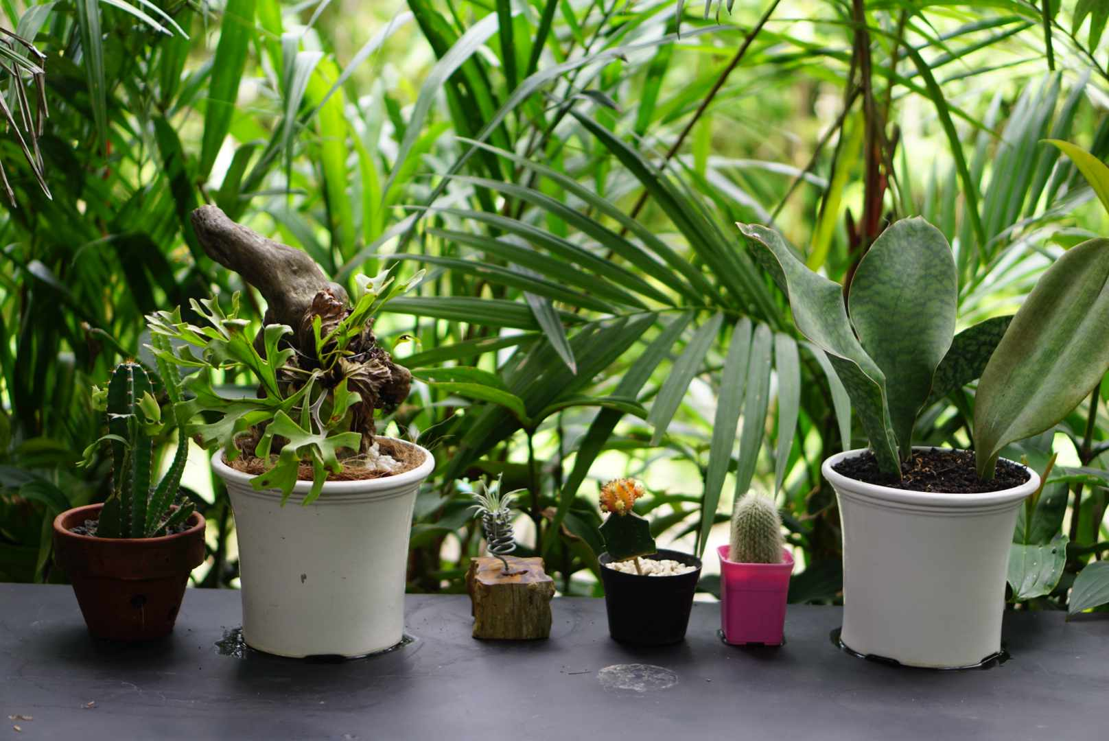 preparing a list of plants so you know what to buy