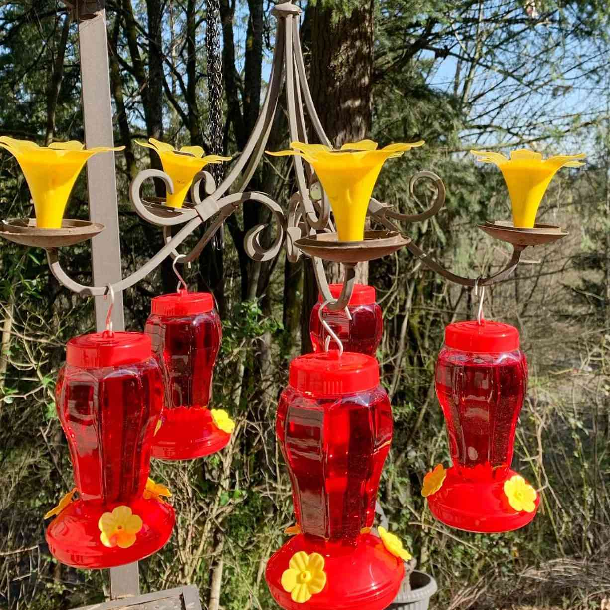 A chandelier with hummingbird feeders