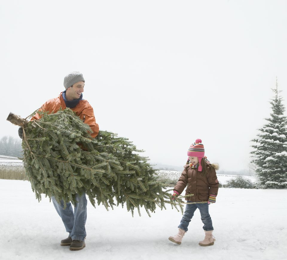 A man carrying a Christmas tree with his daughter
