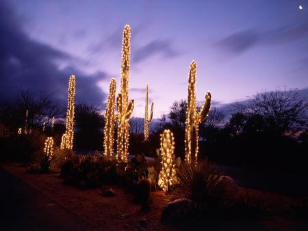 how to decorate cactus and succulents with lights - Cactus Christmas Decorations