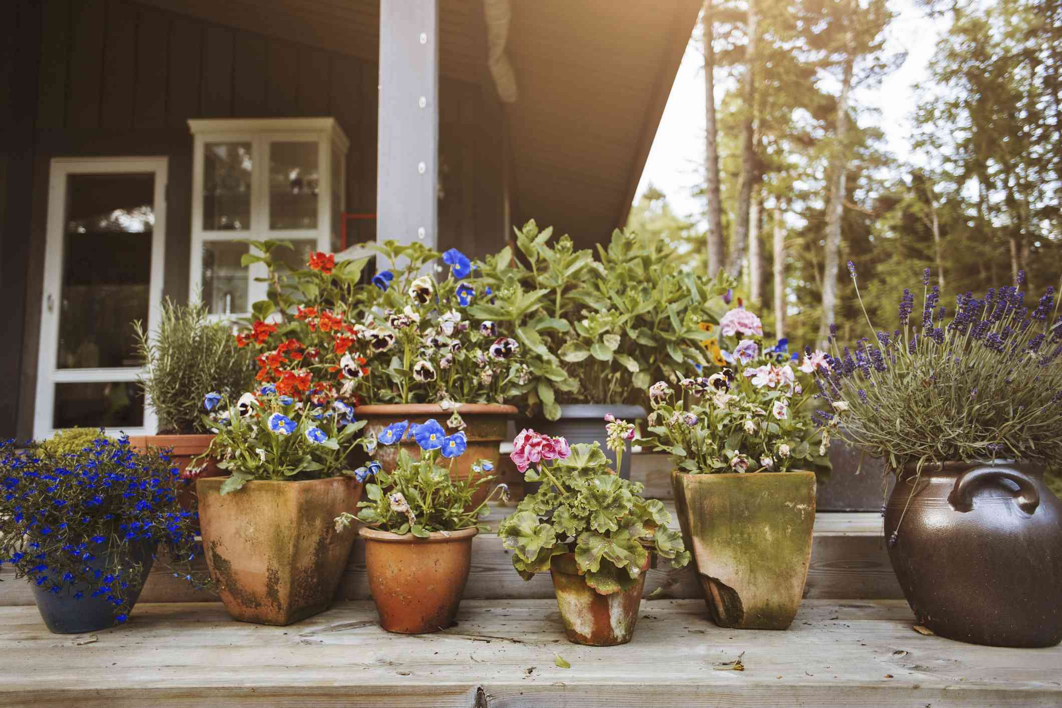 Flores que crecen en macetas