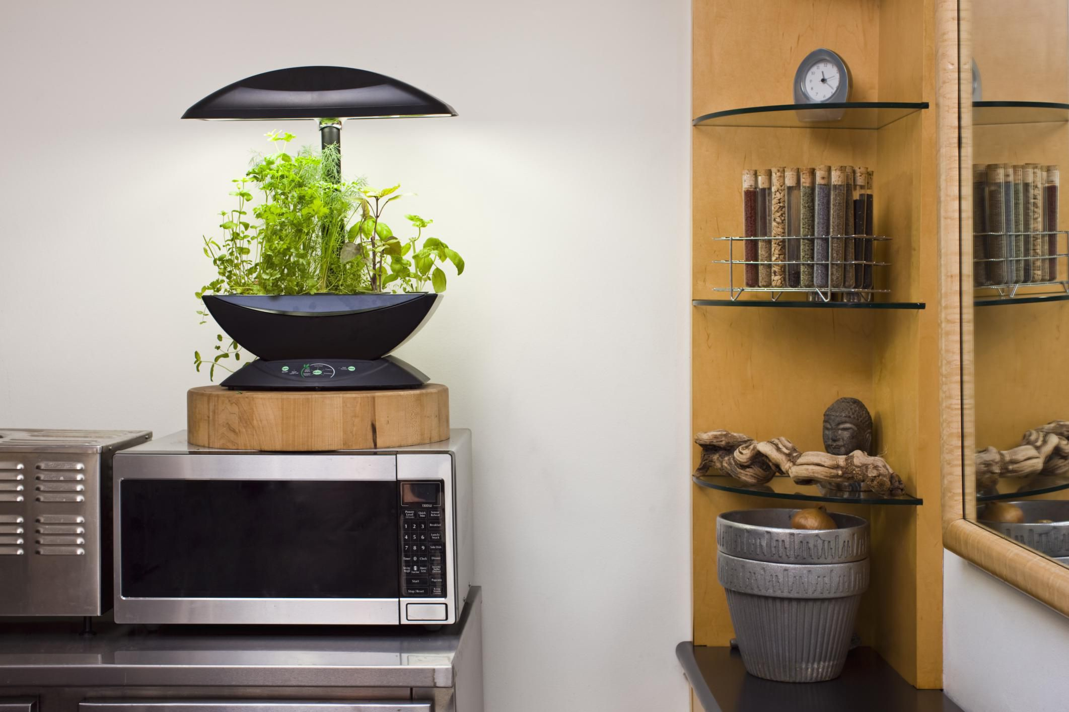 Everything You Need to Know About Hydroponic Lighting