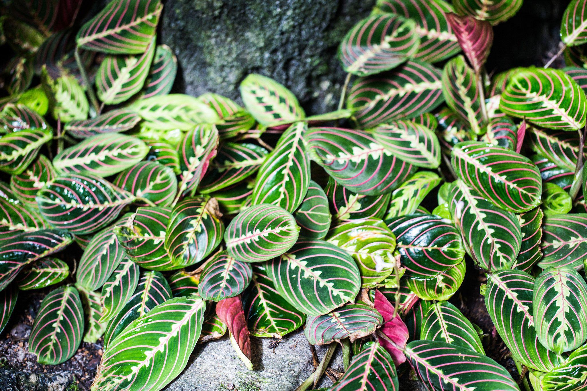 10 Easy To Grow Terrarium Plants