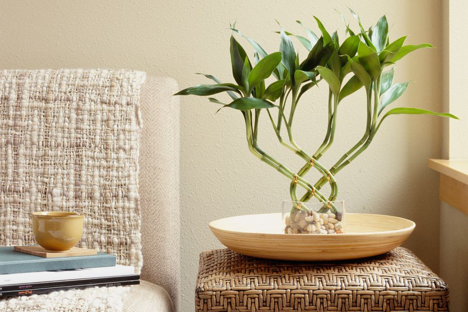 The lucky bamboo is one of the most popular feng shui cures. In traditional feng shui, the lucky bamboo is used to attract health, happiness, love and abundance. The feng shui lucky bamboo is widely used in both home and office feng shui decor solutions.