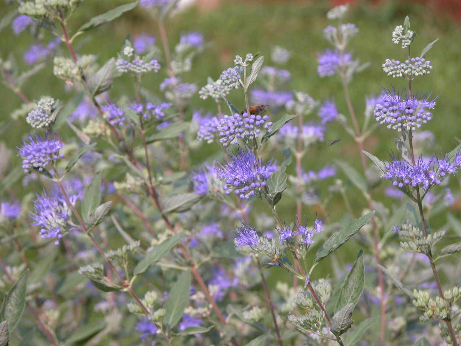 12 Beautiful Blue Flowering Plants For The Garden