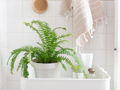 A Boston fern on a bathroom cart