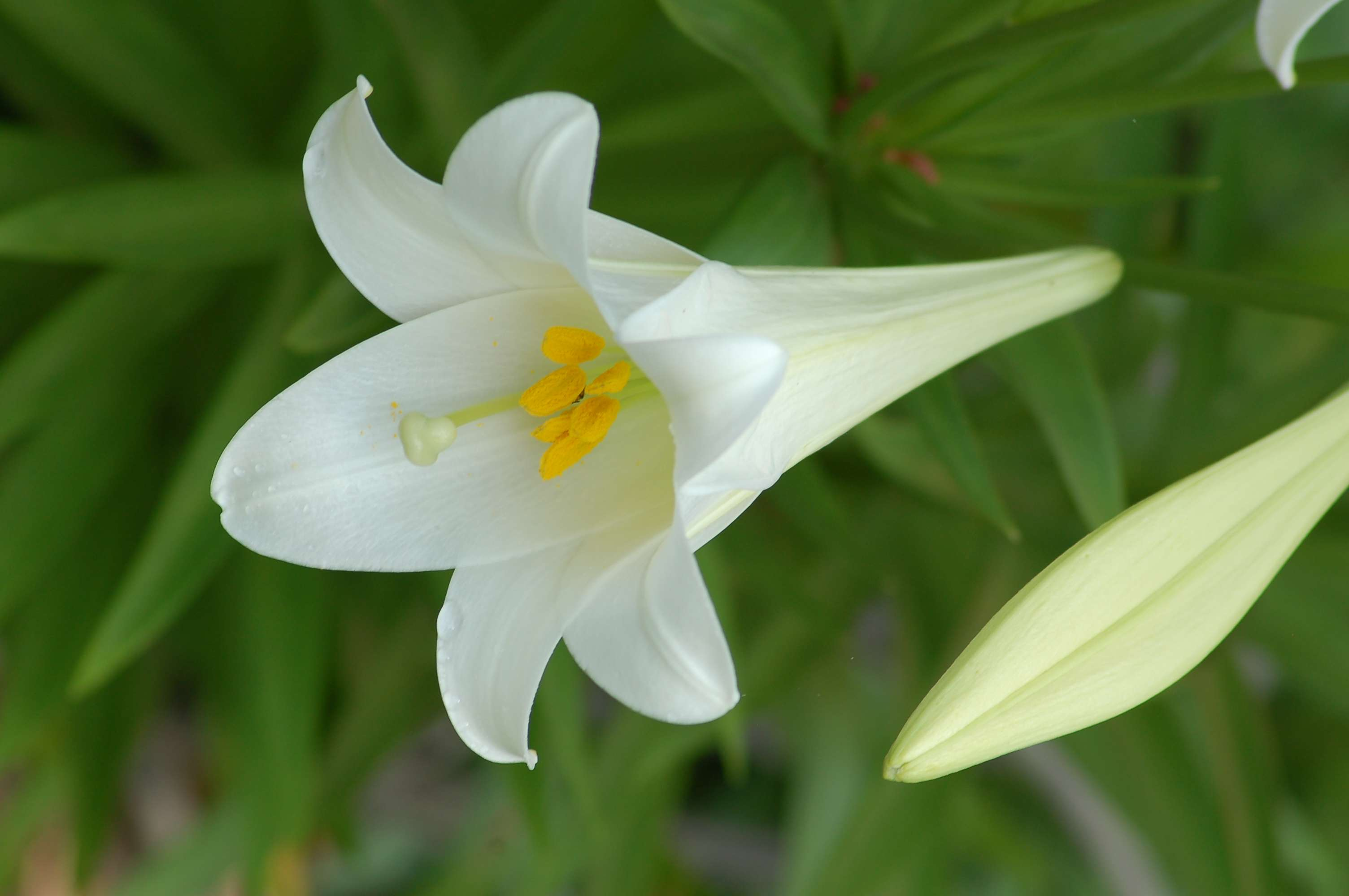 Womens names that are inspired by flowers izmirmasajfo