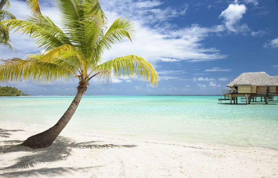 Image: Palm tree on tropical beach.