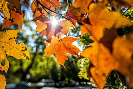 7 Things To Do With Fall Leaves